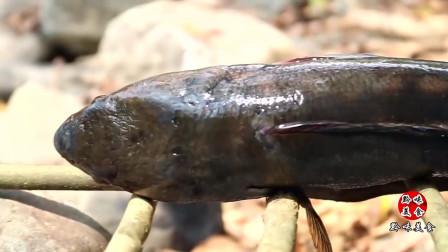 农村大婶在河沟抓了一条鲫鱼,直接炭火烤熟蘸酱吃,太香了