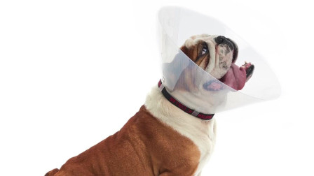 BUSTER Dog Collar for Brachycephalic Breeds 丹麦古氏巴思图短头犬专用易扣颈圈介绍