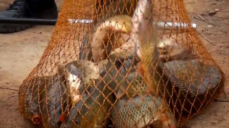 《笑哥说钓》第8集:如何正确使用笑哥传奇鲤鱼饵料