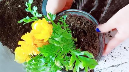 花卉养殖换盆不伤根的小妙招,简单又实用!