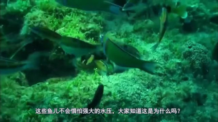 深海鱼不惧怕强大的水压,大家知道这是为什么吗?今天算长见识了