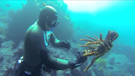 实拍蛙人海底活捉大龙虾,这技术活一般人做不了!