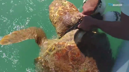 海龟漂浮水面,不停挣扎,钓鱼人看到后马上准备施救