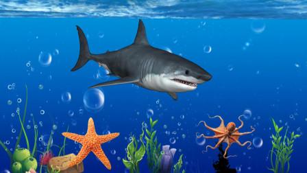 鲨鱼  海豚  海龟