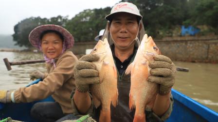 小渔和渔爸出海收笼,今天收获了10几斤螃蟹,外加两条红友鱼