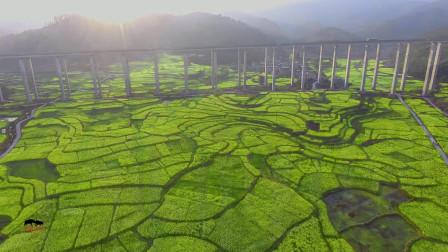 皮林美如画:十里长田坝,万亩油菜花