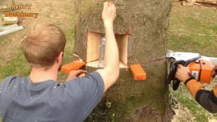 原来大树是这样砍,外国人砍树都这么科学,涨姿势了