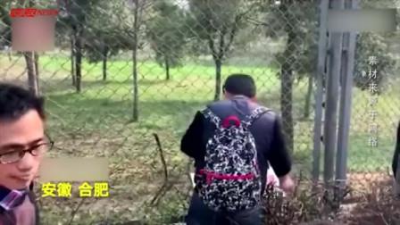 惊险!男子手机滑落虎园 想捞出时老虎阻拦