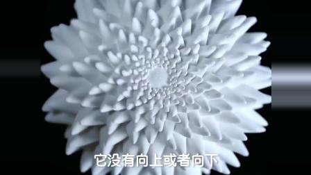 眼见不一定为实,你以为它在开花,其实它只是在疯狂旋转