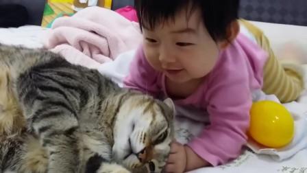 宝宝和宠物猫愉快的玩耍,谁说有孩子的家庭不适合养宠物猫