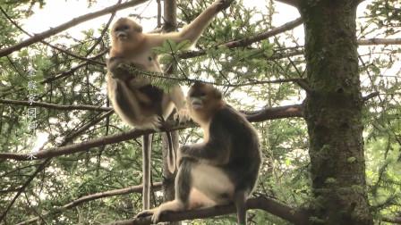 湖北旅游系列纪录片:金猴家园神农架
