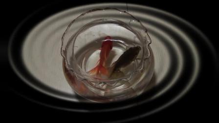 酵素救鱼奇迹