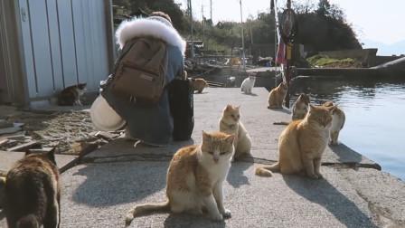 日本猫岛视频,当地居民只有猫数量的六分之一,小猫咪们真的是太可爱了!