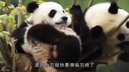 中国这个神兽全世界仅剩三只,一公一母在中国,一只在越南