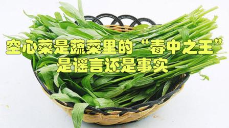 """空心菜是蔬菜里的""""毒中之王""""?是谣言还是事实?还能放心吃吗?"""