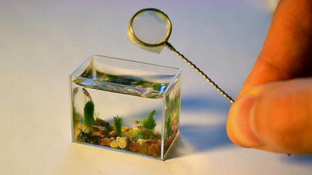 世界最小的鱼缸,仅3厘米长,网友:告诉我这能养啥鱼?
