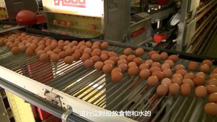市场上鸡蛋真的是母鸡下的?看完工厂制作过程,网友:这下放心了
