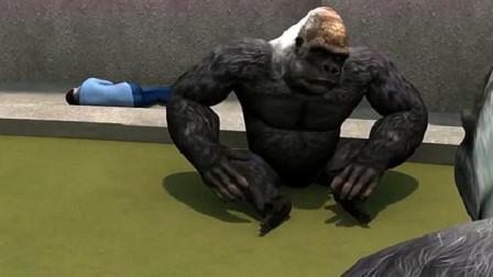 一小孩不慎掉进猩猩园区,这只猩猩的这一举动却感动了无数人