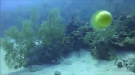 在海里打鸡蛋,是你想象不到的结果!