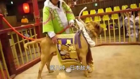 世界上最危险的狗!这些犬类由于太危险禁止饲养!