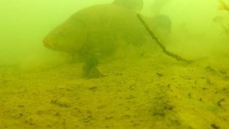 钓鱼底钓的时候, 水下大鱼小鱼活动实况实拍