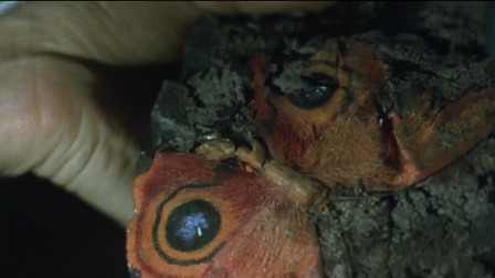 男子意外踩死一只远古蝴蝶,导致时空错乱,巨兽都复活了