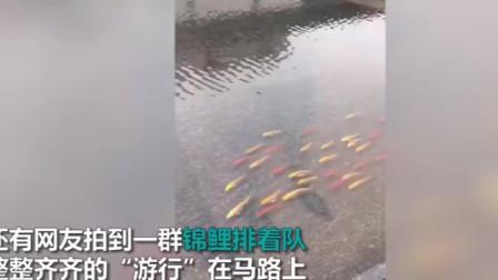 """广东暴雨后市民上街抓鱼:锦鲤齐对游行一条鱼""""跃龙门""""飞进家中"""