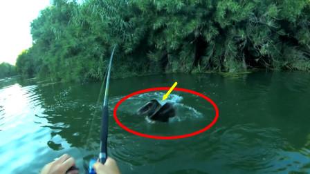 钓鱼:第一口脱钩,再来一口,激动人心的时刻立马上演