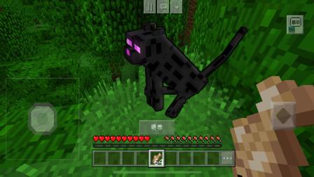 教你如何在我的世界中驯服一只会瞬移的末影猫