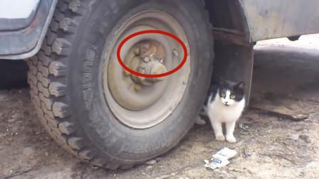 狡猾的老鼠躲在轮胎上,还以为猫咪没发现它,结果下秒就悲剧了