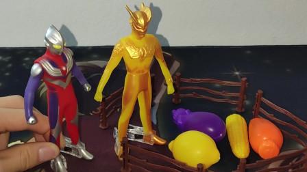 二木玩具17:金古桥投迪迦奥特曼的蔬菜,赛罗来帮忙
