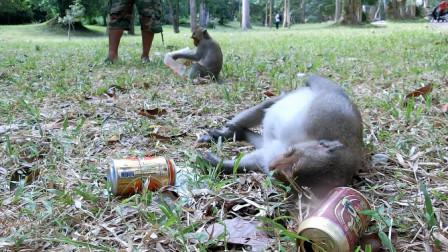 猴子向游客讨酒喝,游客非常爽快的给了三罐,下秒忍住不要笑!