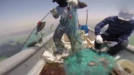 一条渔网下面竟然挂满了这种鱼儿,大叔这下有的忙活了