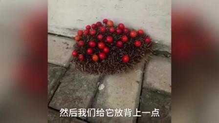 刺猬去派出所偷樱桃,民警帮打包:吃饱再背几个带走吧,太可爱了