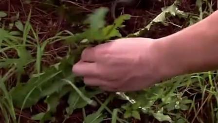 八斗省钱寄给家里,自己去树林挖野菜,旁边还有人给他解说