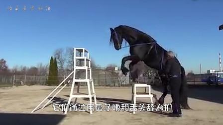 公马越过护栏来到母马身边,动物的爱情也是很纯粹的