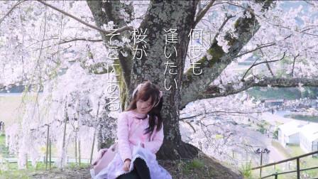 你见过树龄1000年的樱花树吗?【软软冰】