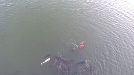 鱼群上浮,水面嚣张浮游,这样的鱼情该怎么调钓