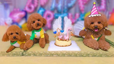 狗妈千里迢迢回家和儿子团聚过生日