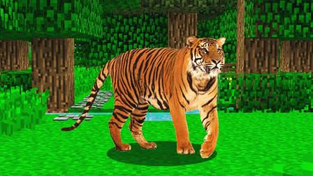在我的世界中驯服一只凶狠的老虎