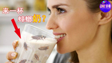 蟑螂奶营养丰富,但是你敢吃吗?5个最难以接受的奇葩美食