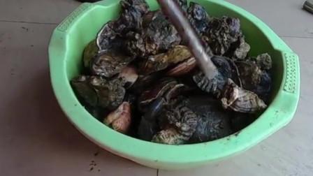 烂泥地的海鲜泛滥,阿壮跟老婆抓了大半桶,拿回家直接铁锅爆炒