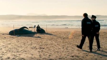 鲸鱼搁浅海滩,一个个跟展览似的,原来海底出现巨大外星生物