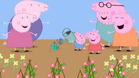 小猪佩奇和猪爸爸去菜地种菜  乔治也来帮忙  玩具故事