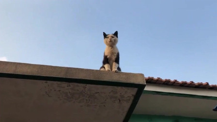 猫咪上房子了,也不清楚它咋上去的,咱也不敢问呐!