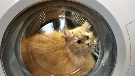 把猫放进洗衣机里会发生什么?老外实验,网友:爱猫人士已上路!