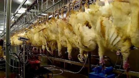 德国最新杀机生产线,鸡都没反应过来就被掏空了,鸡:我毛呢?