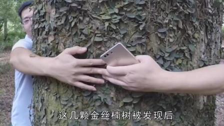 老人院子里发现千年价值2亿的金丝楠木,它的归属权却饱受争议
