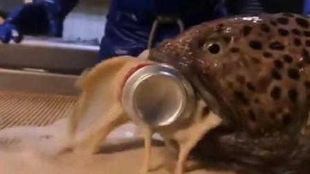 这是什么鱼?断头还能咬人!