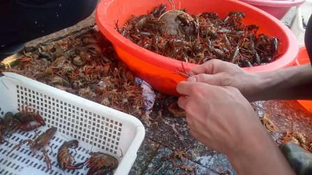 活的小龙虾怎么处理 买小龙虾的老板说了,这样处理过的小龙虾用盐水浸泡再洗洗就干净了,您觉得呢